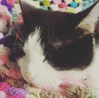 cute black and white cat crochet blanket
