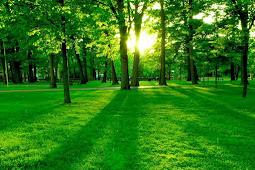 Pengertian, Fungsi, dan Proses Fotosintesis