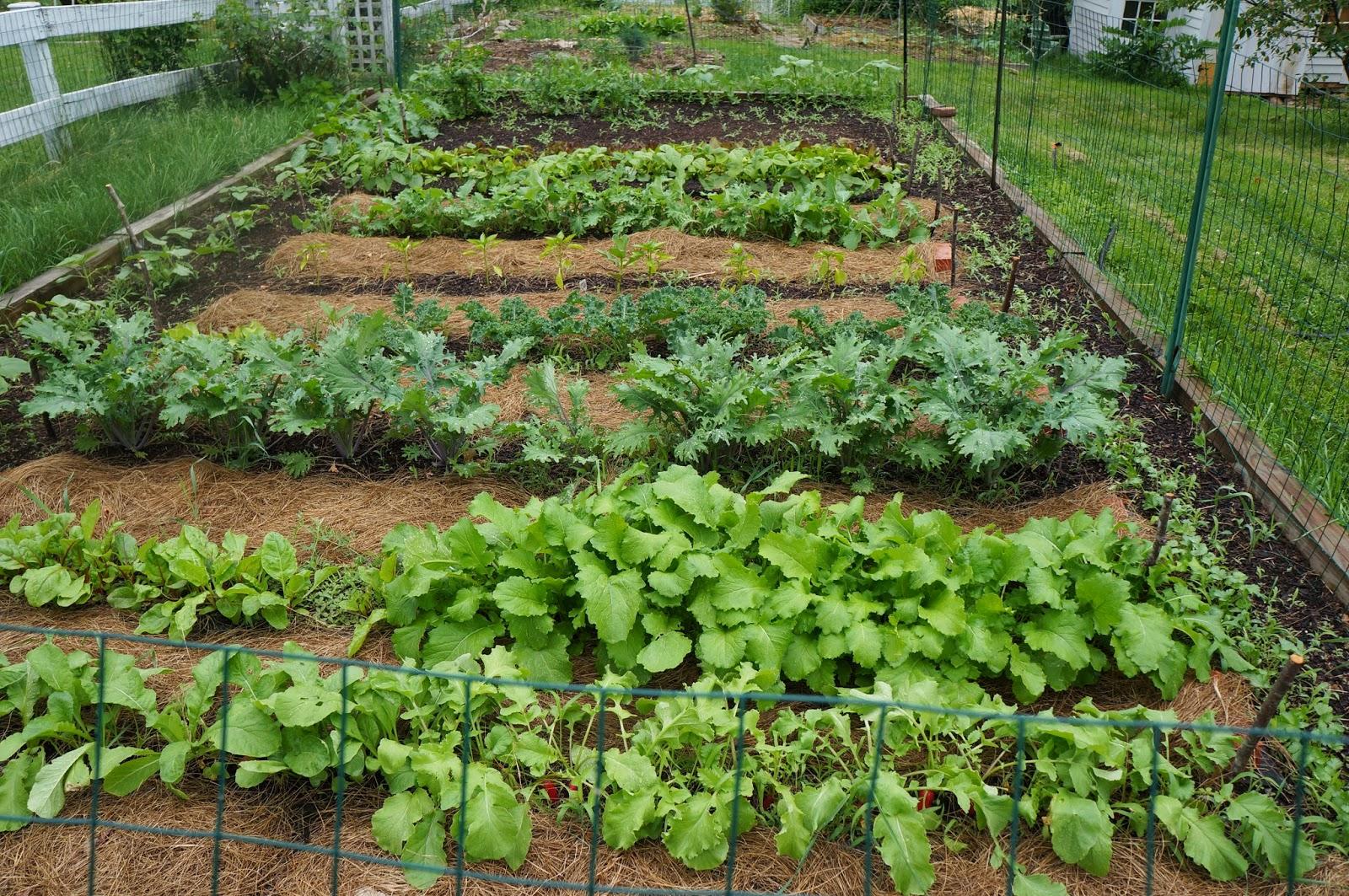 The Backyard Farming Connection: Garden Update