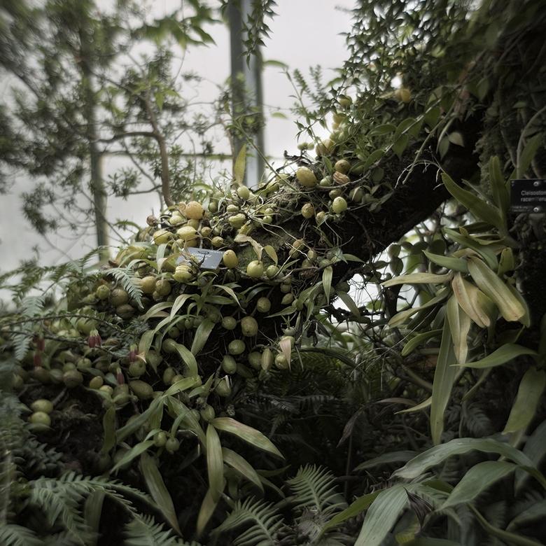 """The Glasshouse"" Jose Snook. Invernaderos Real Jardín Botanico Edimburgo"