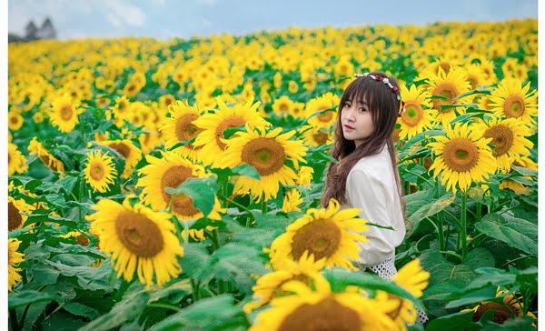 Cành đồng hoa màu vàng đầy rực rở