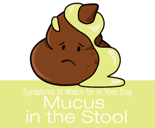 Symptoms to Watch for in Your Dog: Mucus in the Stool