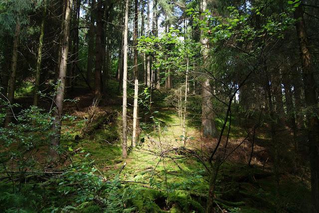 Blick in den Sonnendurchfluteten Wald