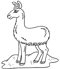 Baby Llama Coloring Pages