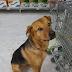 ΜΗΠΩΣ ΤΗΝ ΓΝΩΡΙΖΕΤΕ; Βρέθηκε σκυλίτσα στα Βριλήσσια...