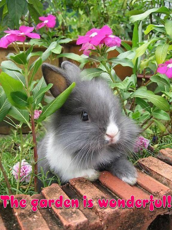 ccute animals the garden is wonderful