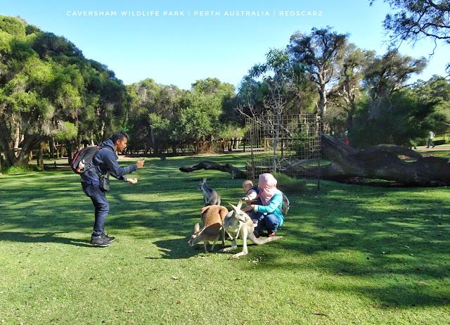 Caversham Wildlife Park, Perth Australia
