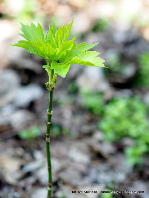 drzewa, drzewo, siewka, las legowy, legi, nad rzeka, warszawa, spacer, wycieczka, piekny dzien, na grzyby, grzybobranie