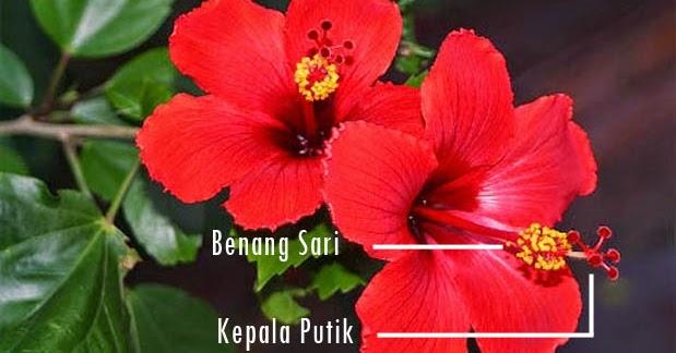 5 Contoh Bunga Sempurna Bagian Bagian Dan Gambarnya