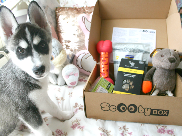 ScoobyBox || A Monthly Box Of Dog Goodies!