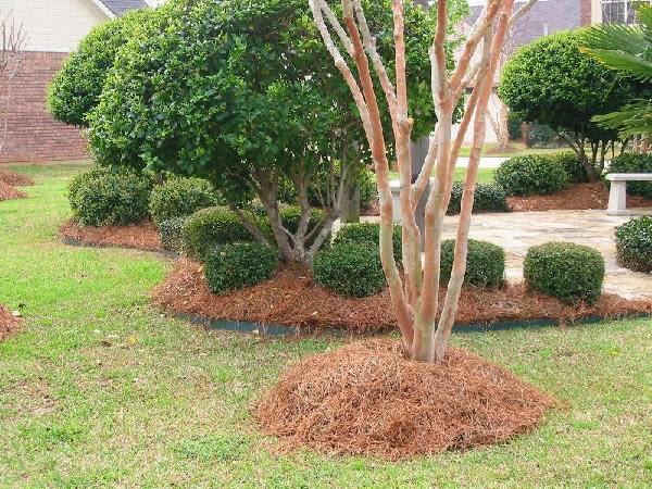 Dry mulch around the bases of trees and shrubs