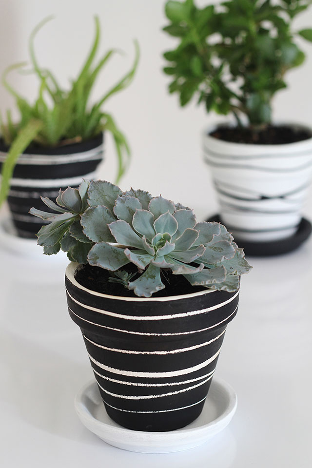 Black, white, & green. Potted plants get love in monochrome.
