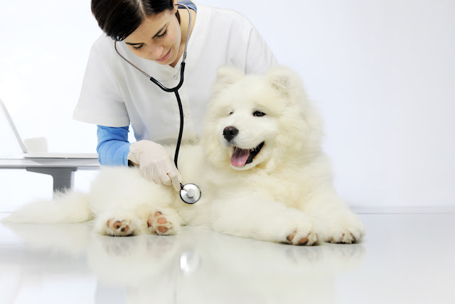 We should monitor dogs for stress at the vet, and here's how dog owners and vets can help, according to new research. Photo shows dog at vet having blood draw.