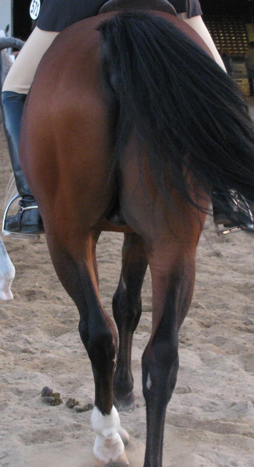 Excelente Stifle Horse Anatomy Molde - Imágenes de Anatomía Humana ...