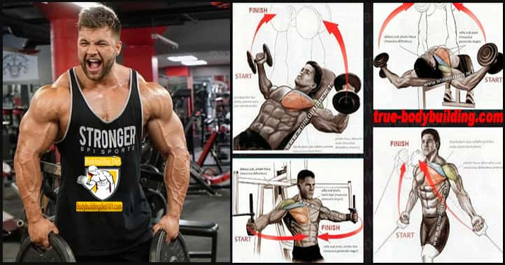 Bodybuilding Exercises Chest
