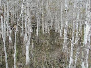 swamp Walking Florida