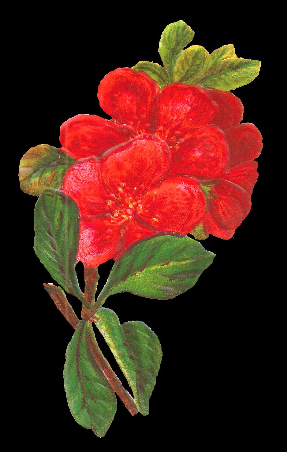 Antique images botanical art digital red flower download for Art flowers