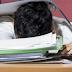 Plaćeno bolovanje radnicima u FBiH žele smanjiti s 42 na samo 15 dana