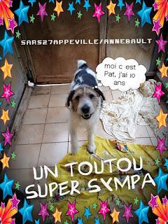 PATt - fox terrier 12 ans - (aveugle) Refuge de l'Esperance à Appeville Annebault (27) HOST