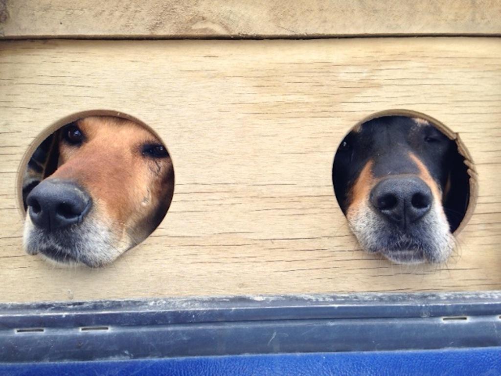 Working Dog Housing