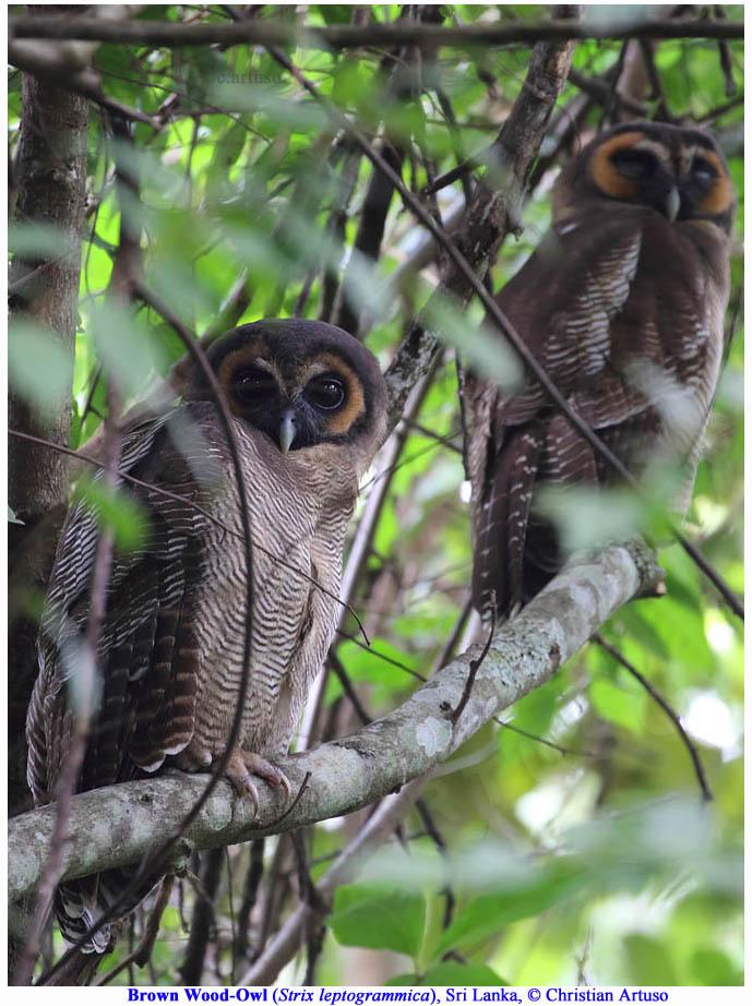 Hausfrauensex In Owl