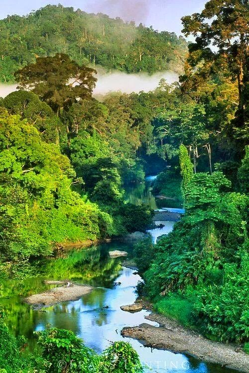 Danum Valley, Sabah, Malaysia 10 Worlds Amazing And Beautiful Forests