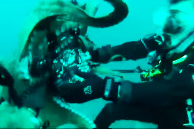 Diver Attempted To Record A Footage Of A Giant Octopus, But What Happened Next Was Terrifying!