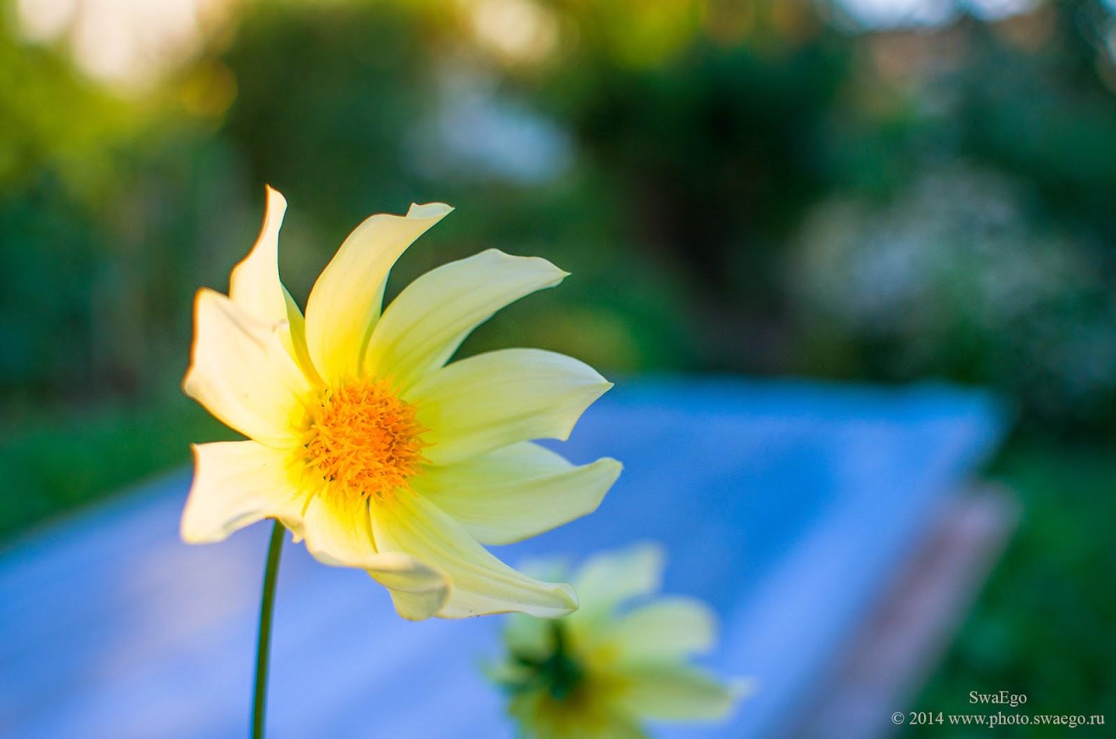 Цветочное вологодское
