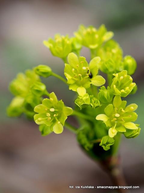 drzewo, drzewa, prosto z lasu, las, wiosna, kwiaty, las bemowski, wycieczka, spacer