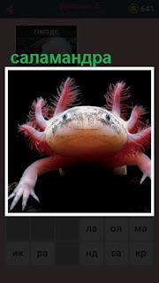ползет саламандра и шевелит своими лапками