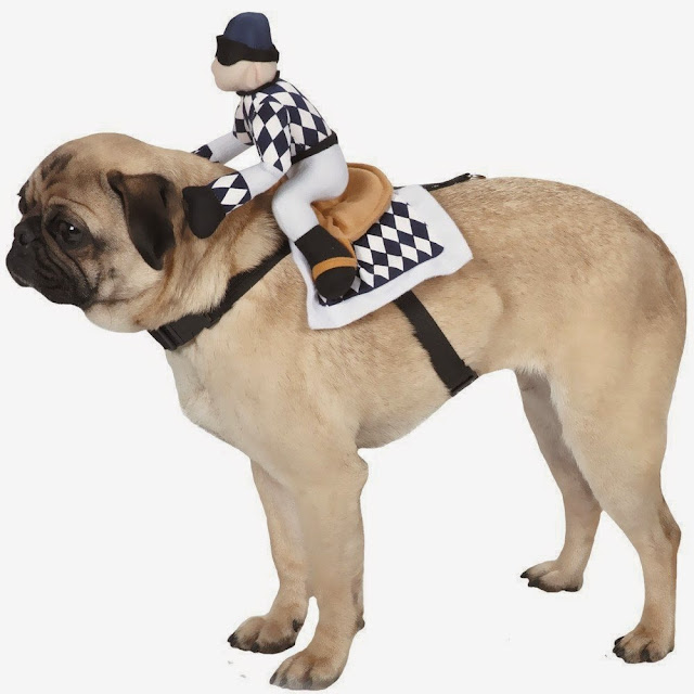 Halloween costume for dogs with harness and jockey