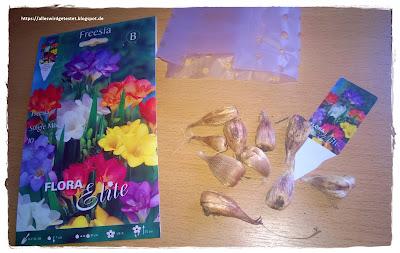 Blumenzwiebeln Freesien Mix