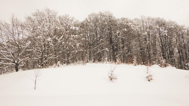 Fotografia di alberi coperti di neve sul Terminillo