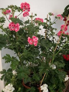 Blütenträume - Dein Blumenladen