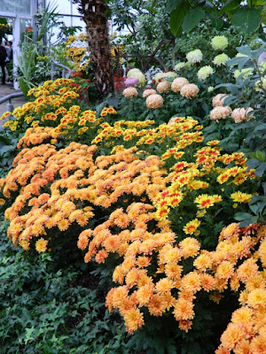 Massed orange and yellow chrysanthemums at 2016 Allan Gardens Conservatory  Fall Chrysanthemum Show by garden muses-not another Toronto gardening blog