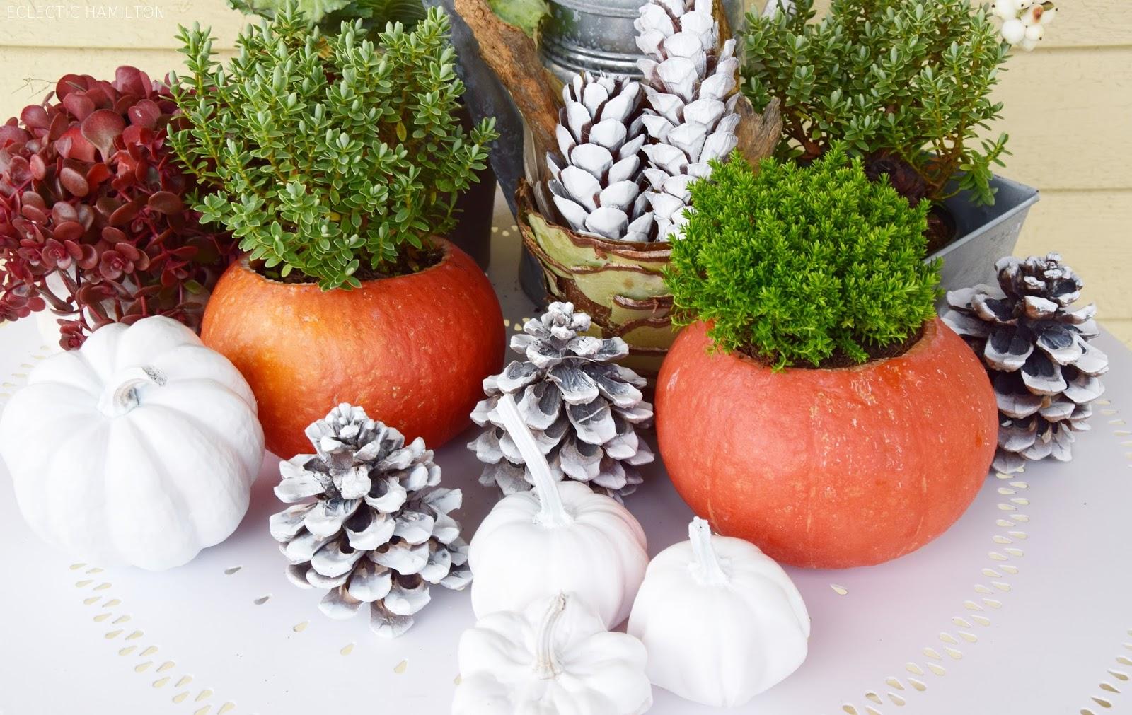 Wir ihr aus Kürbissen tolle Übertöpfe basteln könnt! DIY, selbermachen, basteln, selbst gemacht, Kürbis, deko, dekorieren, dekoration, Herbst, Herbsdeko, Kürbisdeko