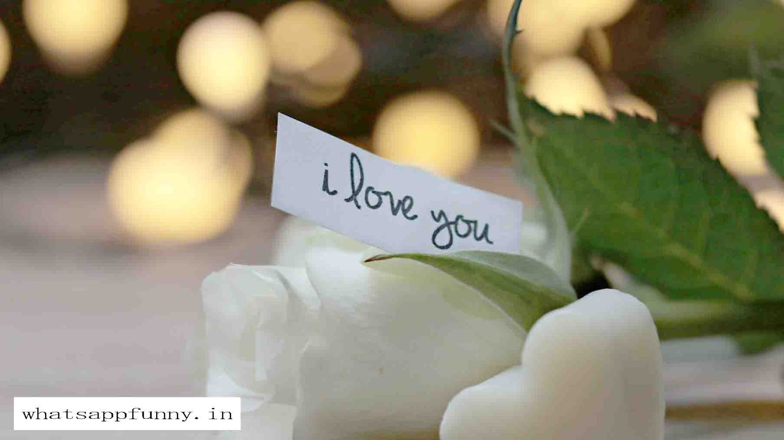 love images download for whatsapp profile hd
