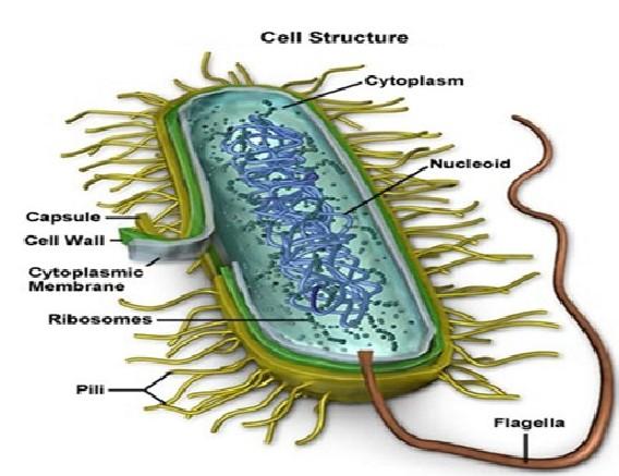 Bakteri dan Peranannya Dalam Menguraikan Sampah Organik