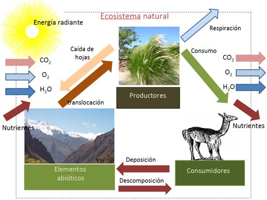 Responsabilidad 2 Parte2012 Cuidado Si Has Escrito Te: Ecosistema