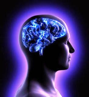 Area Otak Yang Berhubungan Dengan Cinta Dan Hasrat  Area Otak Yang Berhubungan Dengan Cinta Dan Hasrat
