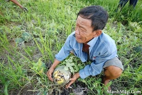 Chùm thơ viết về nỗi lòng của người nông dân