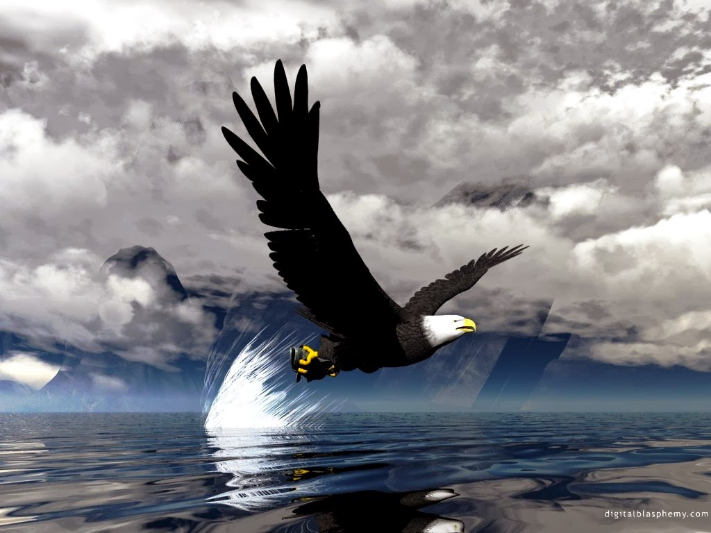 Cute Mei Wallpaper Hot Girl Wallpaper 3d Flying Bald Eagle Hd Wallpaper Free