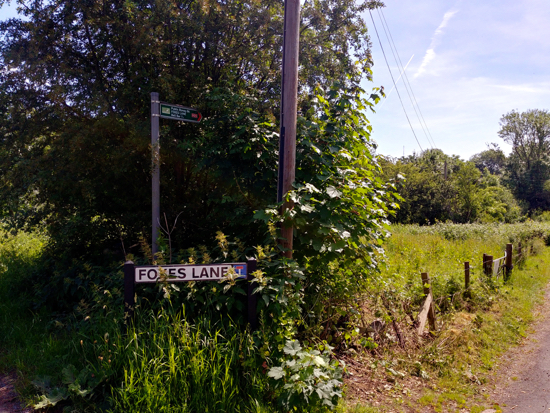 The start of the walk down Foxes Lane