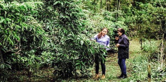 Perkebunan Kopi di Jaga Perempuan Pemberani