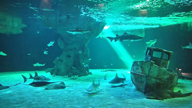 raie, poisson, requin, ocearium, aquarium, croisic, bullelodie