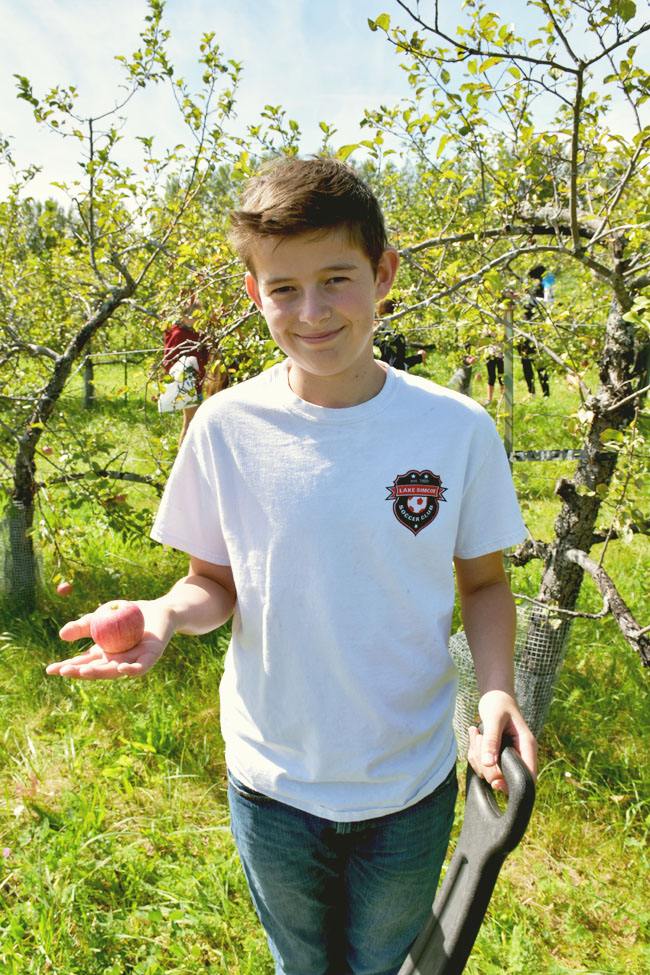 apple picking at Avalon Orchards (organic) in Innisfil, Ontario