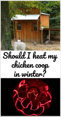 heat in chicken coop | winter