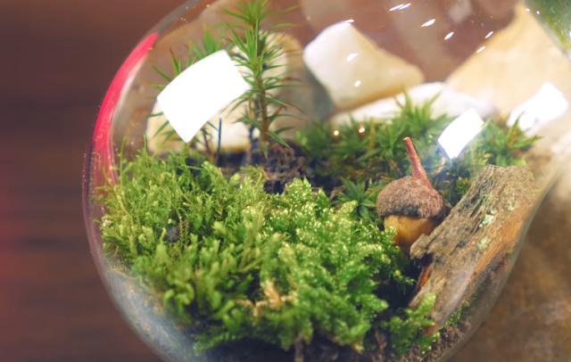 diy terrarium, terrarium, eternal terrarium, diy, diy crafts, terrarium making, diy lightbulb terrarium, easy diy terrarium, terrarium plants diy