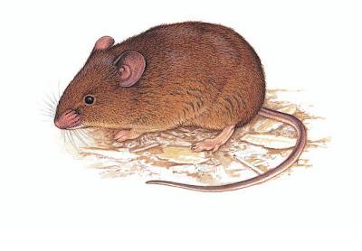 Cursor grass Mouse