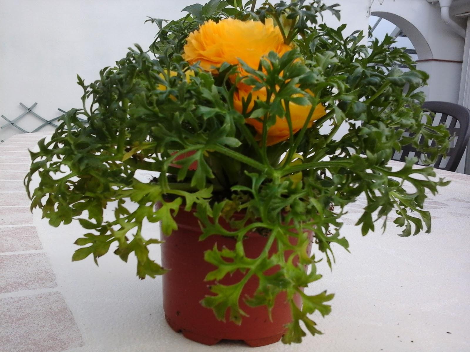 Plantas de exterior resistentes al sol cheap plantas de - Plantas que aguanten el sol ...